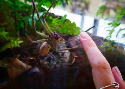 cairns-insectes-juju
