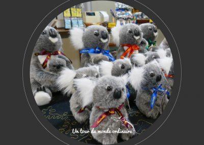 cairns-kuranda-koalas