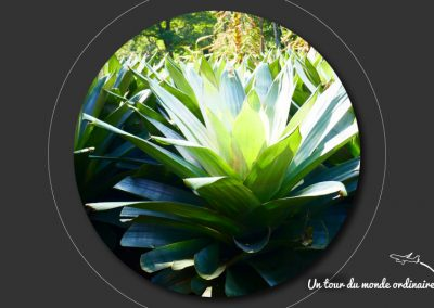 sidney-royal-botanic-park3