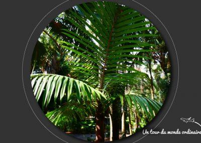 sidney-royal-botanic-park4