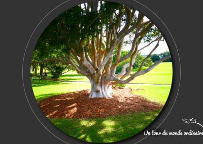 sidney-royal-botanic-park6