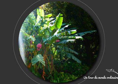 sidney-royal-botanic-park7