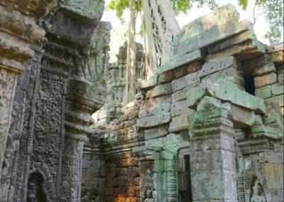 angkor-ta-prohm-arbre