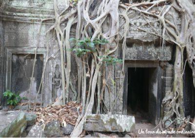 angkor-ta-prohm-vegetal-mineral
