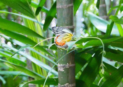 bangkok-jim-thomson-jardin-bambou