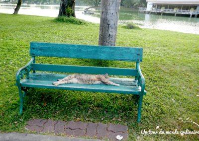 bangkok-parc-lumpini-matou