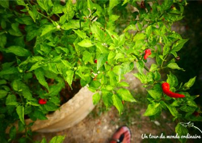 chiangmai-cooking-class-piments