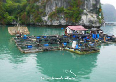 catba-baie-halong-fermes-poissons