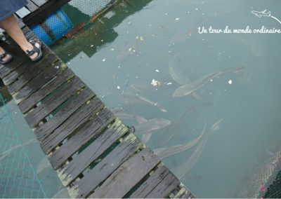 catba-baie-halong-poissons-cages