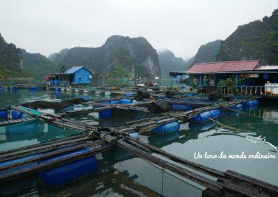 catba-baie-halong-structure-fermes-poissons