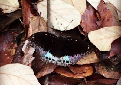 catba-grotte-trang-papillon