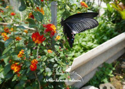 sapa-village-traditionnel-papillon