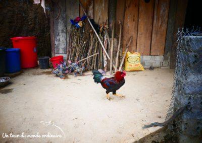 sapa-village-traditionnel-ta-phin-coq