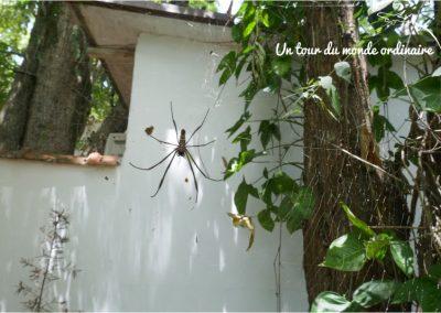 Iguacu-Argentine-araignee